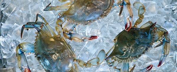 Soft shell crabs 700 600x246